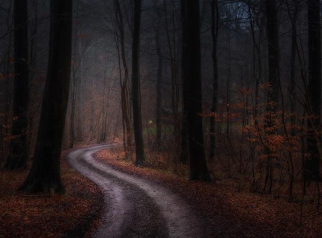 Frederikskilde Forest