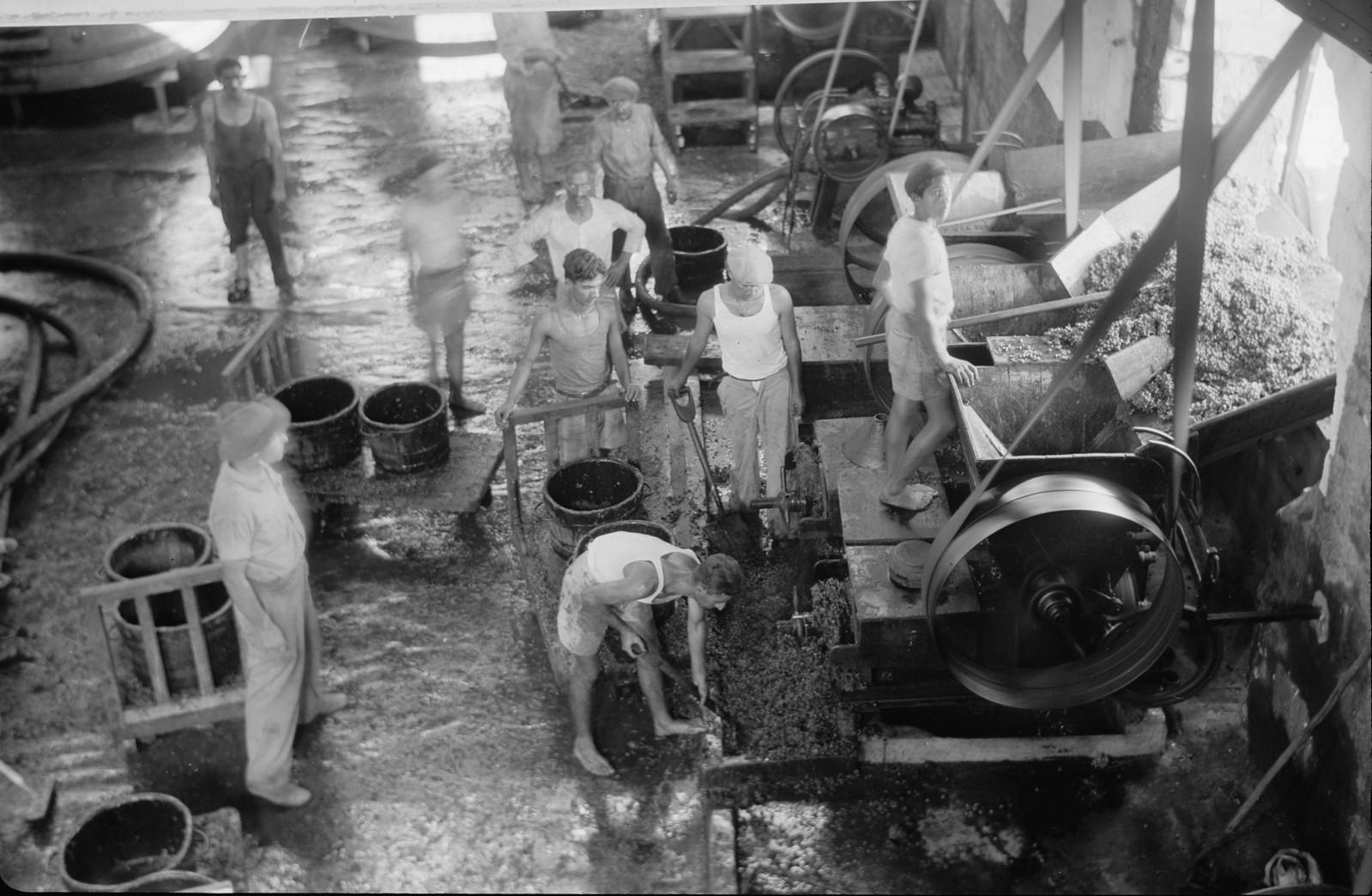03. Виноград в погребе загружают в дробилку