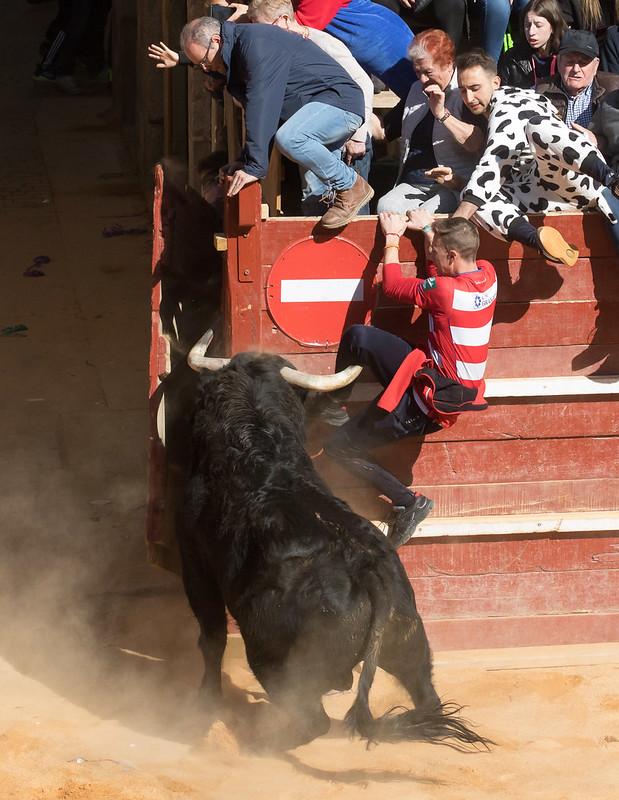 Sábado de Carnaval del Toro, Ciudad Rodrigo (3)