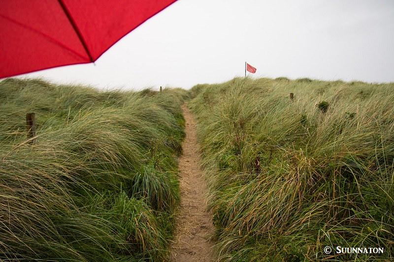 Snowdonian kansallispuisto, rantaheinikko