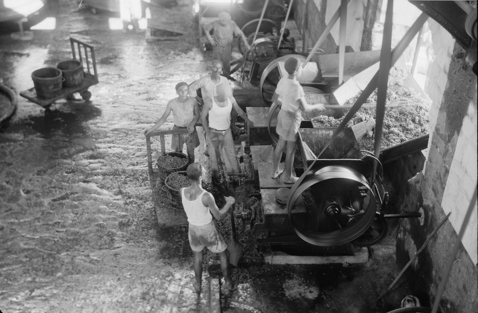 02. Виноград в погребе загружают в дробилку