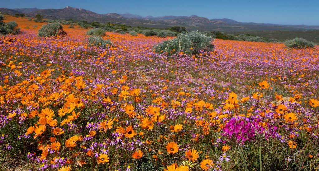 Namaqualand Flower Route, Zuid-Afrika | Mooistestedentrips.nl