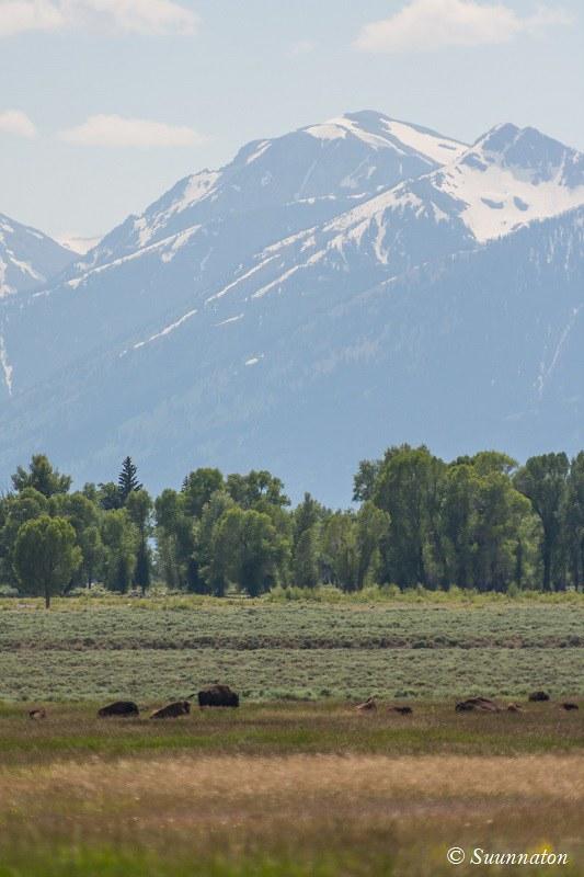 Grand Teton biisonit