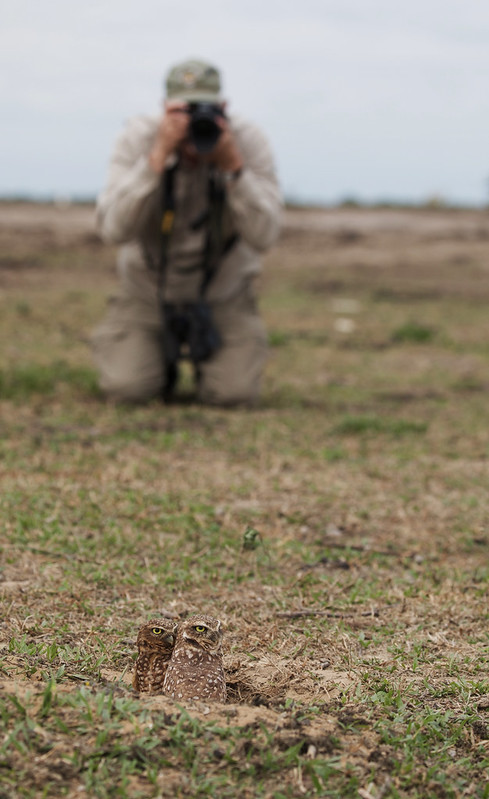 Burrowing Owl_Asthenes cunicularia_Ascanio_Colombia_DZ3A2835