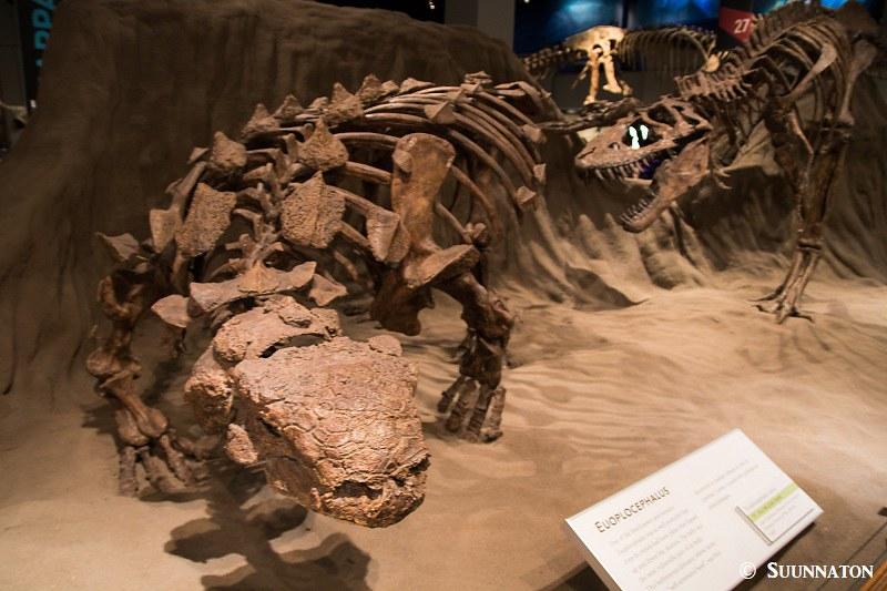 dinosaurusmuseo
