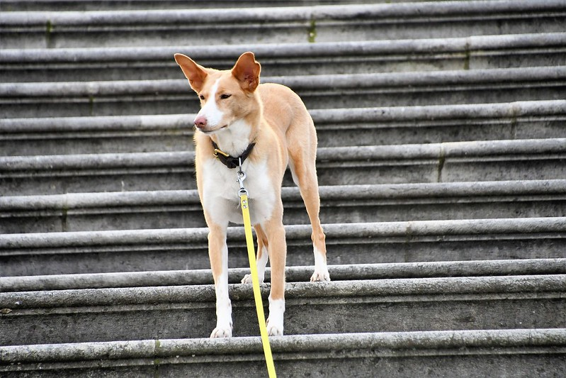 Dog 22.02 (3)