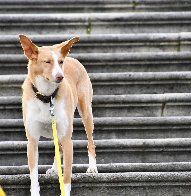 Dog 22.02 (2)