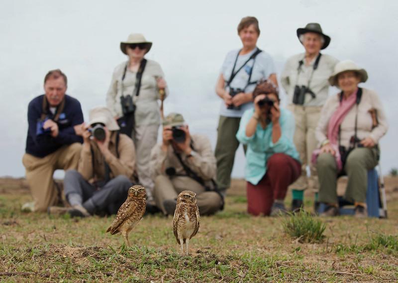 Burrowing Owl_Asthenes cunicularia_Llanos Colombia_Ascanio_DZ3A2876