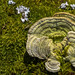 Tree mushroom embedded in moss..