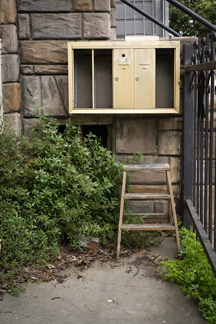 overgrown corner with ladder