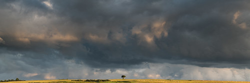 landscapephotography cotswolds cleeve hill light storm clouds golden sunset tree alone dramatic fields evening