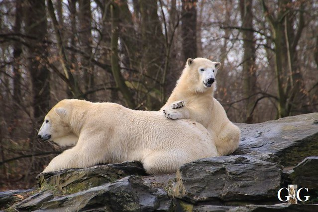 Besuch Tierpark Friedrichsfelde 15.02.202022