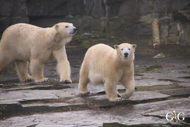 Besuch Tierpark Friedrichsfelde 15.02.20201