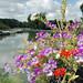 Des fleurs au-dessus du petit port de Génelard