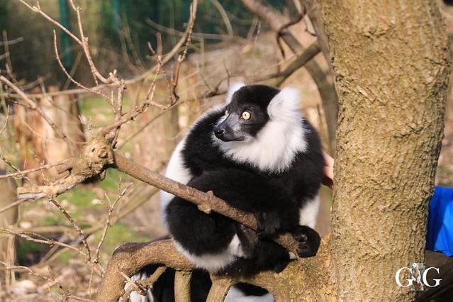 Besuch Tierpark Friedrichsfelde 15.02.202049