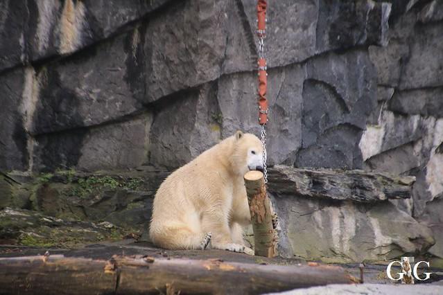 Besuch Tierpark Friedrichsfelde 15.02.202012