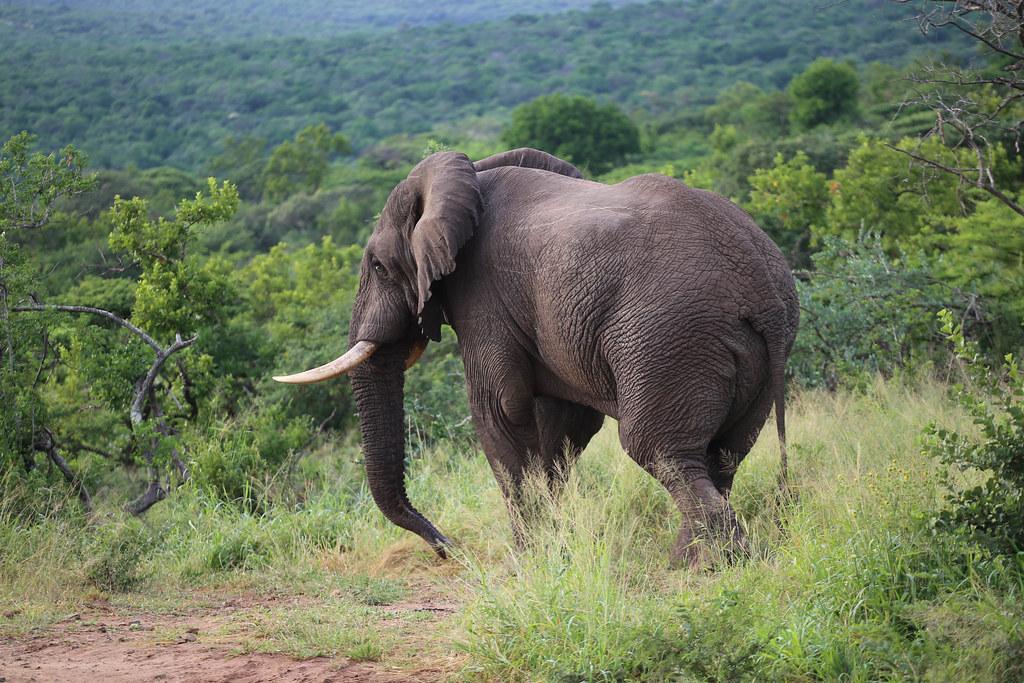 Safari Etelä-Afrikassa Hluhluwe Imfolozi Park