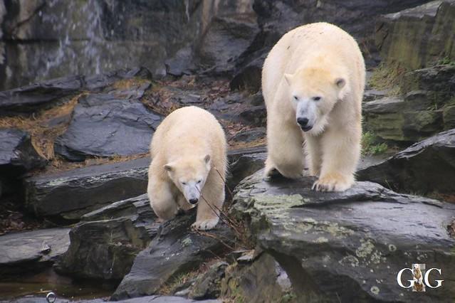 Besuch Tierpark Friedrichsfelde 15.02.20206
