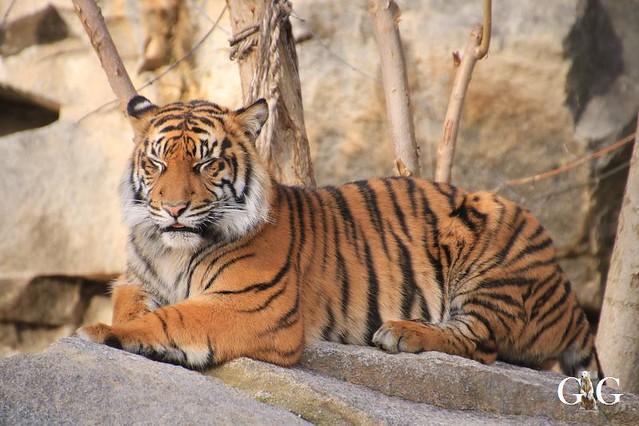 Besuch Tierpark Friedrichsfelde 15.02.202038