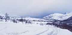 Icy road II