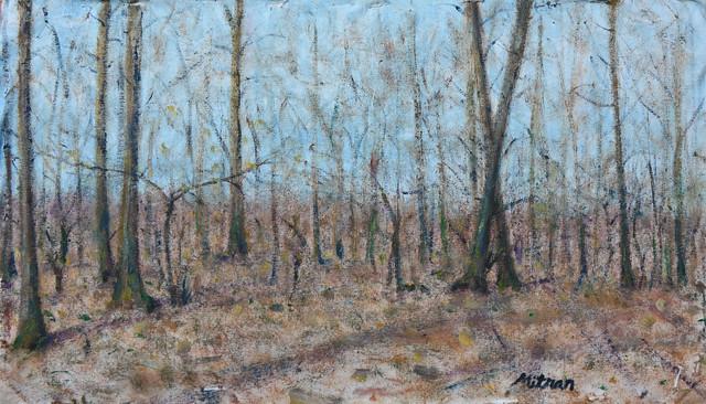 Pădure cu brândușe de primăvară