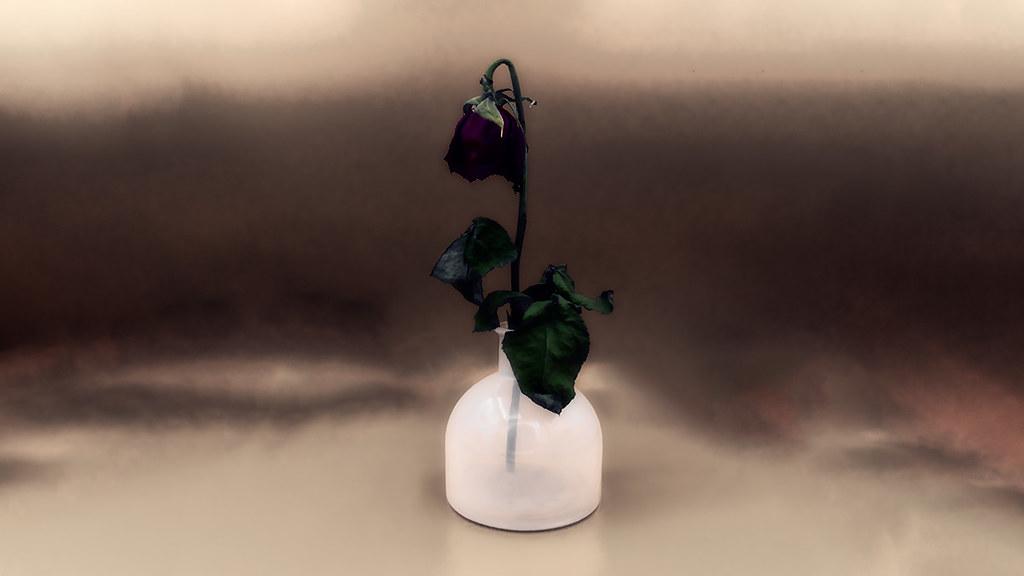 Rosaceae: Feb 21