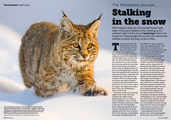 Free Content • Stalking in the Snow