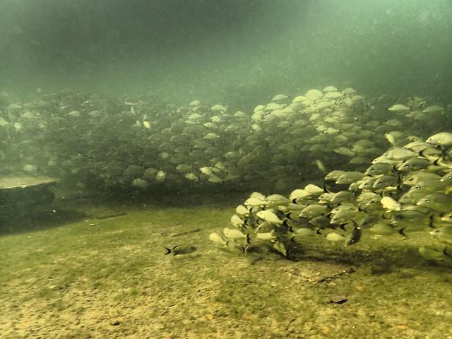 PADI Dive Shop 8 October 2020 Images