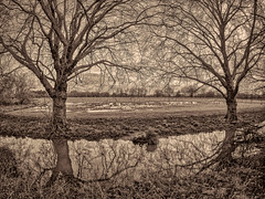 """Waterlogged #2"" Sepia"