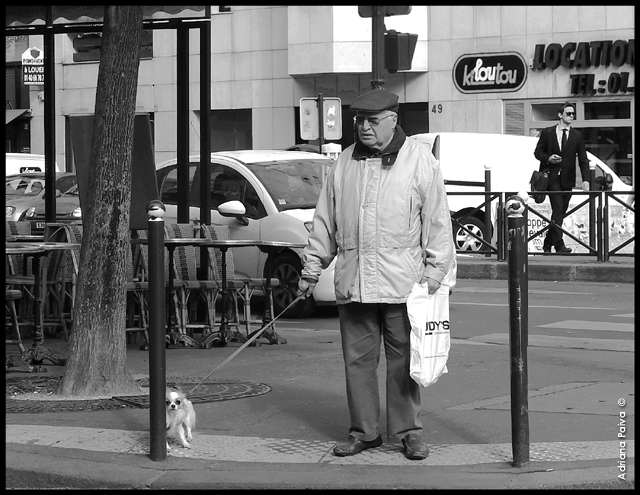 street photography dog lovers drixpaiva Instagram fotografia fotos em preto e branco loucos por cachorro cão petlovers doglovers chiens piétons periodista journalist drixpaiva street photo streets Instagram jornalista Adriana Paiva
