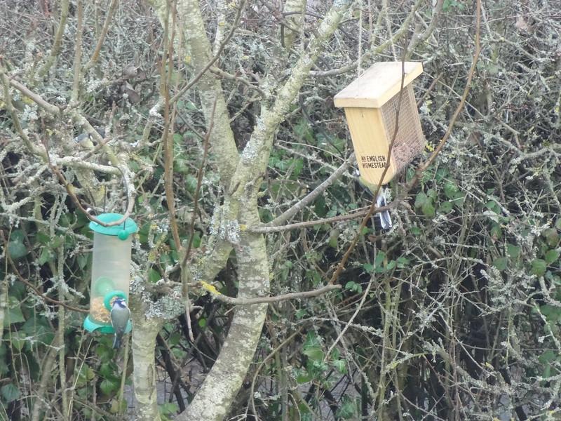 Birds at the bird feeders
