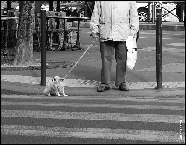Rue Frémicourt 75015 Cambronne pedestres peatones blog da jornalista journalist Adriana Paiva
