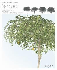 Fortuna // lemon tree