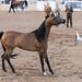 Arabian Horse 1047.jpg