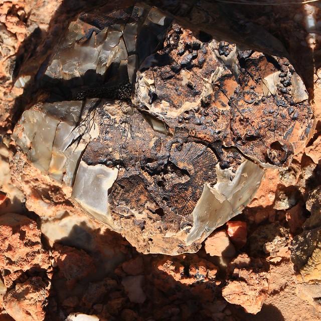 Shell Fossils 7D2_5578