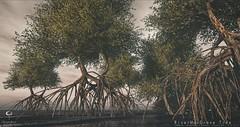 The Little Branch: River ManGrove Tree @UBER
