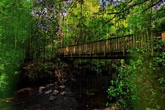 THE BUSHY BRIDGE