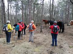 #ESCURSIONISMO - 23 FEBBRAIO 2020 - Escursione sociale nei bosci di cerro e rovere della Riserva Naturale Regionale del monte Lanaro