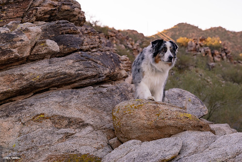 aussie australianshepherd dog hike rock