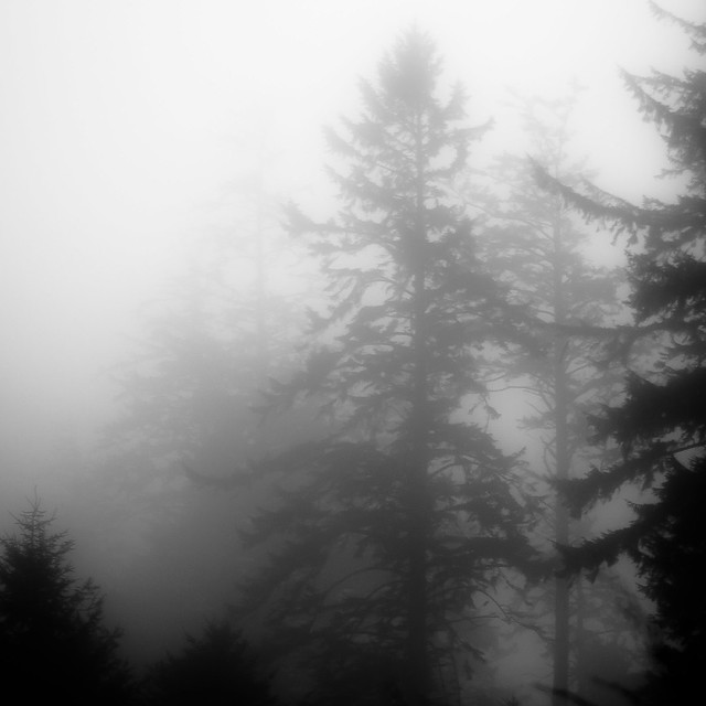Forest In Fog 021