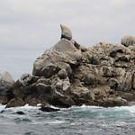 Isla Pan de Azucar
