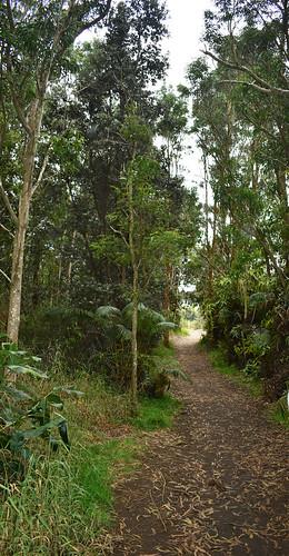 pathway near Kiaauea Caldera. From History Comes Alive at Hawai'i Volcanoes National Park