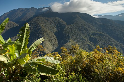 Bolivian Cloud Forest | by aivar.mikko