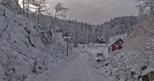 Snow fu... snow