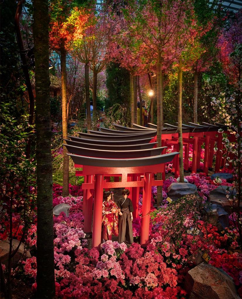 Love my Garden - cover