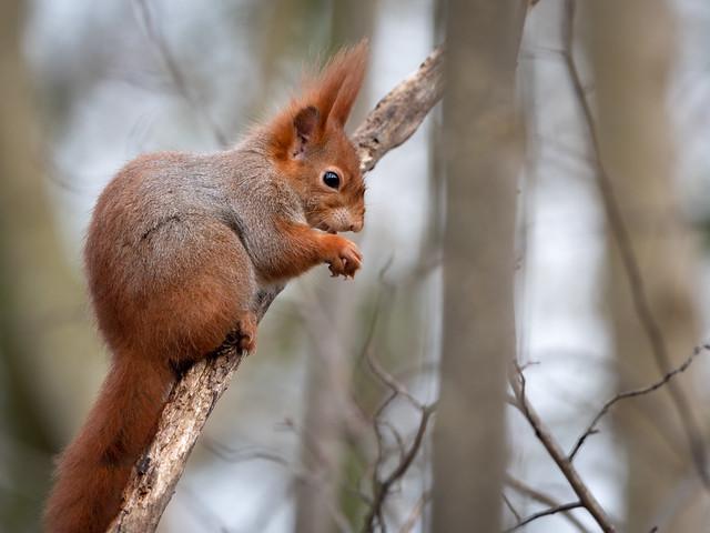 Nuts - jummy