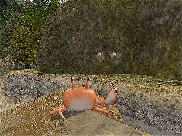 Glenshalane Woods - A Crab and His Bubbles.. (Who Knew?)