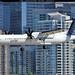 C-GKQA  -  Bombardier Dash 8-Q402  -  Porter Airlines  -  YTZ/CYTZ 19-7-15