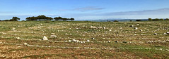 Camino, Alto, 1050m to Burgos