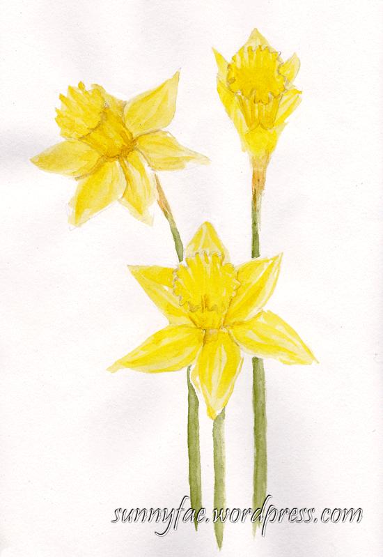3 watercolour daffodils